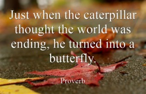 Just when the caterpillar thought the world was ending, he turned into a butterfly. - Proverb
